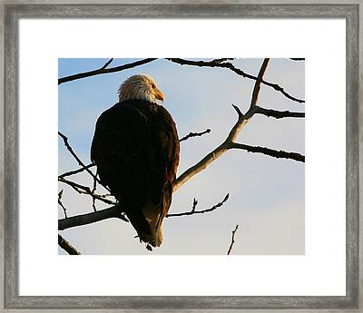 Framed Print featuring the digital art Peaceful Moment by Carrie OBrien Sibley