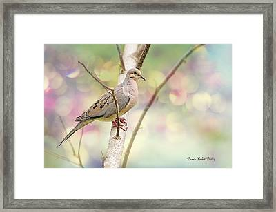 Peaceful Mourning Dove Framed Print