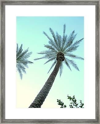 Peaceful Palms Framed Print