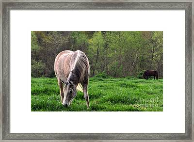 Peaceful Pasture Framed Print by Lydia Holly