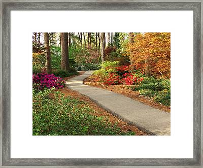 Peaceful Path Framed Print