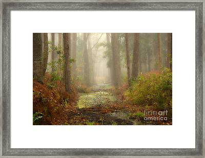 Peaceful Pathway Framed Print