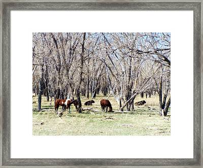 Framed Print featuring the photograph Peaceful Together by Clarice  Lakota