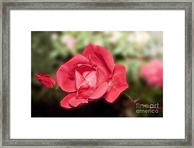 Framed Print featuring the photograph Peacefull Passion by Michael Waters