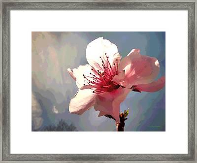 Peach Blossom Macro 2 Framed Print by Joyce Dickens