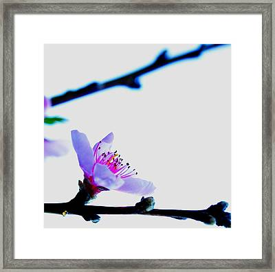 Framed Print featuring the photograph Peach Blossom by Puzzles Shum