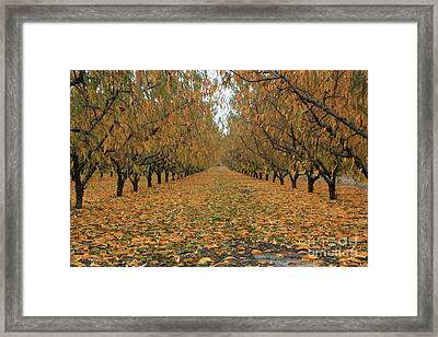 Peach Leaves Framed Print