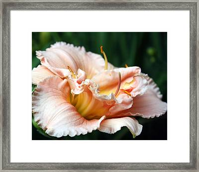 Peach Magnolia Love Affair  Framed Print by Penny Hunt