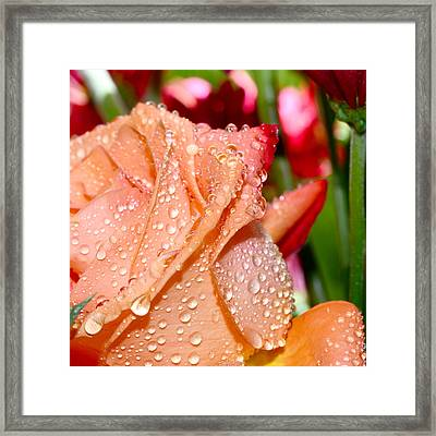 Peach Rose Framed Print by Michelle Armstrong