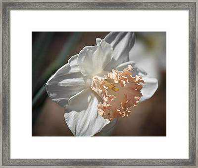 Peach Ruffle Daffodil 1 Framed Print by Teresa Mucha