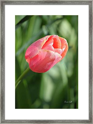 Peach Surprise Framed Print by Suzanne Gaff