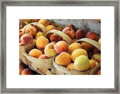 Peaches Framed Print by Kristin Elmquist