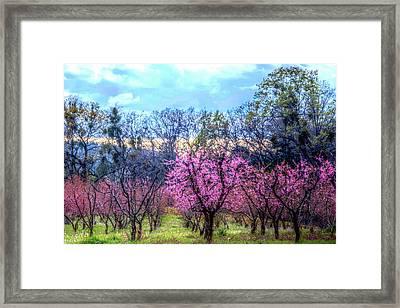 Peachy Blossum Scene2 Framed Print