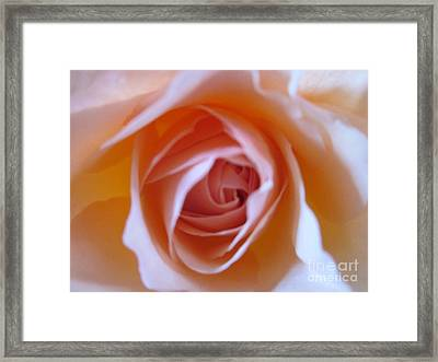Peachy Keen Framed Print by Miss McLean