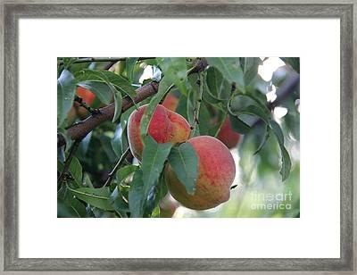 Peachy Morning Framed Print by Yumi Johnson