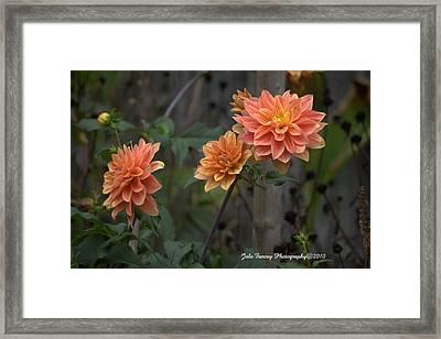 Peachy Petals Framed Print