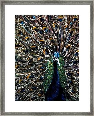 Peacock 2 Framed Print by Amanda Dinan