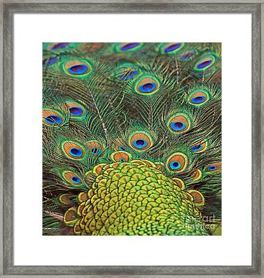 Framed Print featuring the photograph Peacock  Detail by Larry Nieland