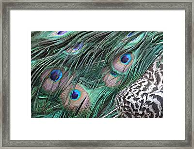 Peacock Feathers Framed Print by Donna  Smith
