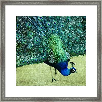 Peacock Pride Framed Print by Linde Townsend