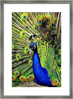 Framed Print featuring the photograph Peacock by Puzzles Shum