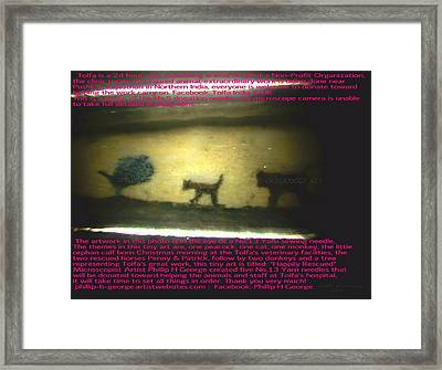 Peacock The Cat And Monkey Framed Print by Phillip H George
