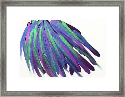 Peacock Wig Framed Print