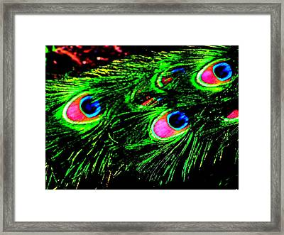 Peacock With Flare Framed Print