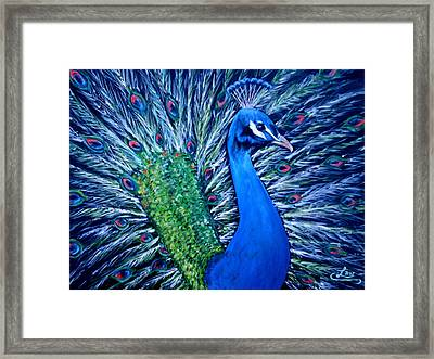 Peacocking Framed Print by Chris Law