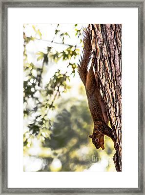 Peanut Run Framed Print