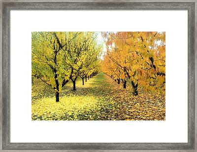 Framed Print featuring the photograph Pear Orchard In Fall by Katie Wing Vigil