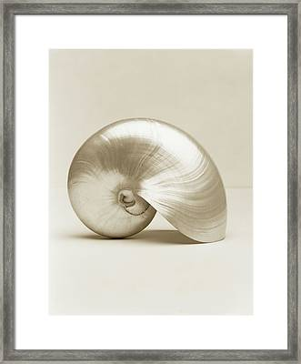Pearlised Nautilus Sea Shell, Close-up Framed Print by Finn Fox