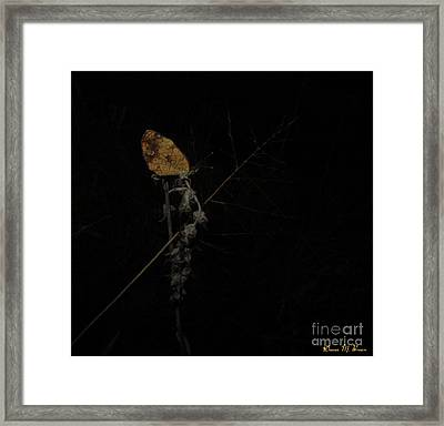 Pearly Crescentspot Butterfly Framed Print by Donna Brown
