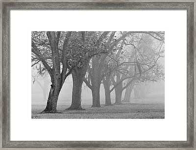 Pecan Grove Framed Print by Dan Wells