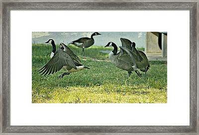 Pecking Order Framed Print by Debbie Sikes
