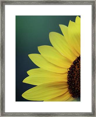 Framed Print featuring the photograph Pedals Of Sunshine by Cathie Douglas