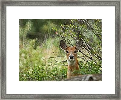 Peek A Boo Framed Print