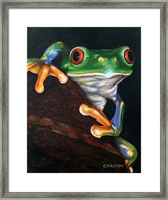 Peek-a-boo Frog Framed Print by Brian Carlton
