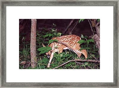 Peek A Boo I See You Framed Print