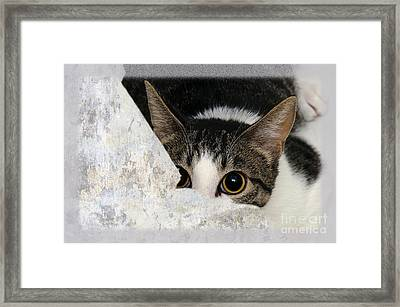 Peek A Boo I See You Too Framed Print by Andee Design