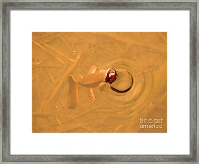 Peek A Boo Newt Framed Print by Nick Gustafson