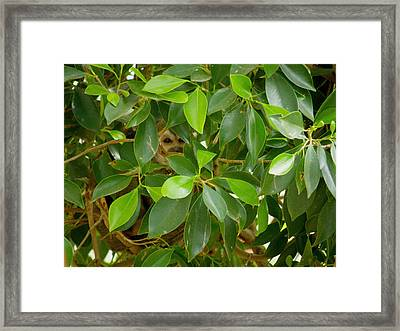 Peek Framed Print by FeVa  Fotos