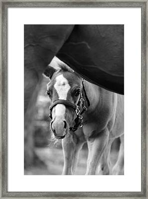 Peek'a Boo - Black And White Framed Print