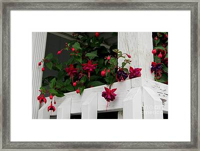 Peeking Around The Corner Framed Print by Sandra Maddox