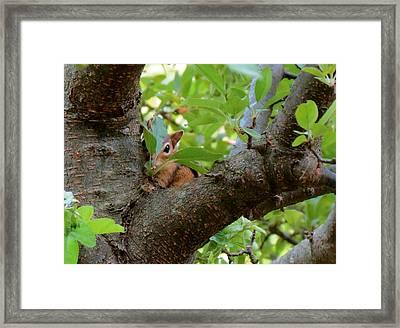 Peeking Chipmunk Framed Print