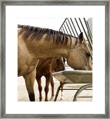 Framed Print featuring the photograph Peeking Pony by Lorraine Devon Wilke