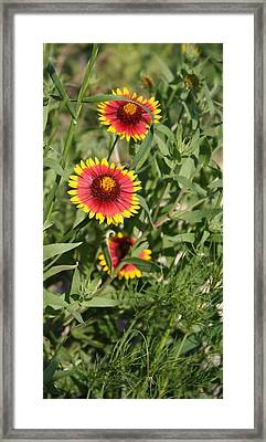 Framed Print featuring the photograph Peeking Through by Lynnette Johns