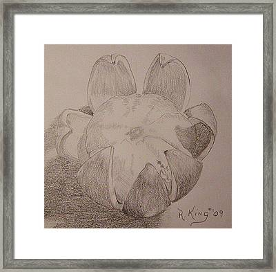 Framed Print featuring the drawing Peeled Orange by Roena King