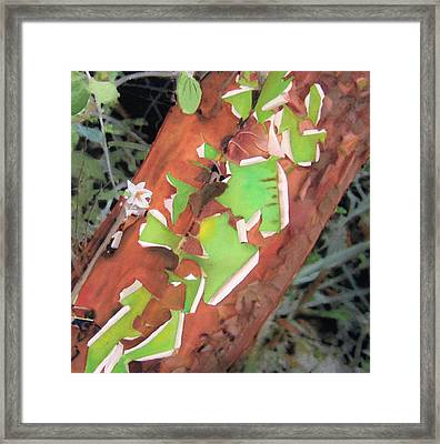 Peeling Madrone Framed Print by Robert Duvall