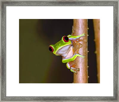 Peepers Framed Print by Tony Beck